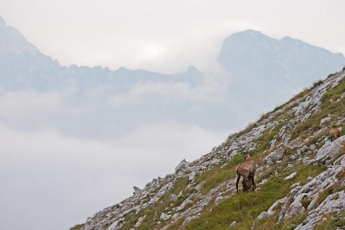 Un sentiero da non perdere se vuoi vedere i camosci a Cortina