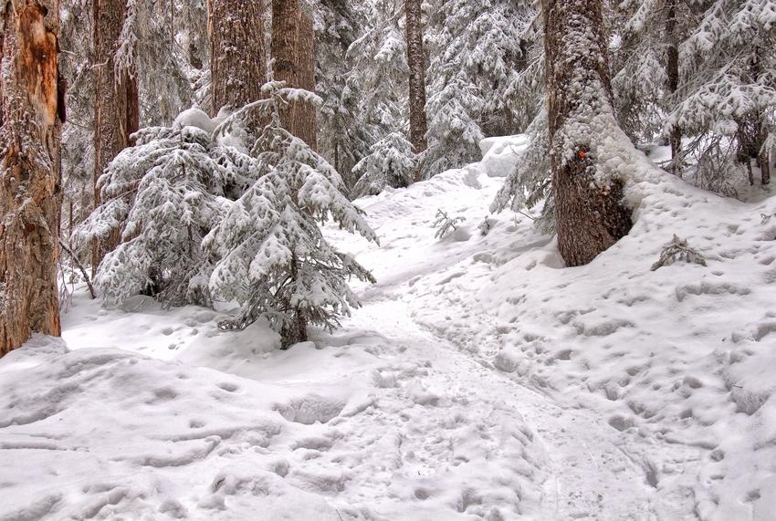 U sentiero innevato in un bosco
