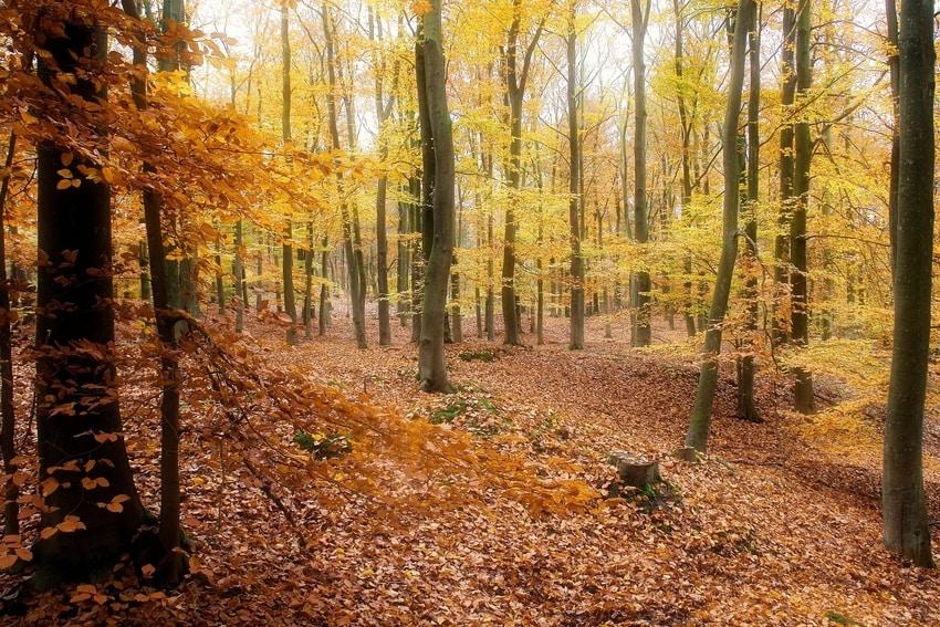 Ammirare il foliage nelle Dolomiti