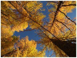 Andare a vedere il foliage sulle Dolomiti